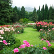 canvas print picture - Rose Garden