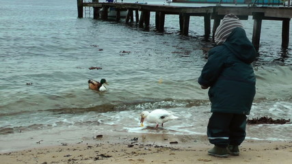 Little boy on the beach feeding ducks, slow motion