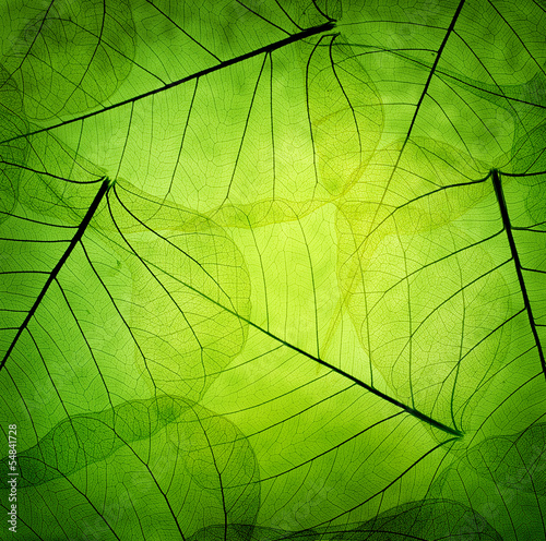 Leinwanddruck Bild Green leaves vintage background