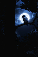 Owl Watches Intently Illuminated By Full Moon On Halloween