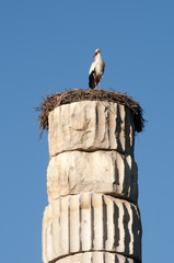 Stork on column, Ephesus, Turkey