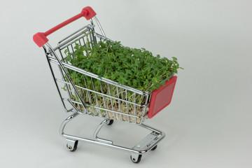 Kräuter einkaufen
