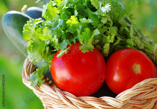 Tomato, cocumber and cilantro herbs
