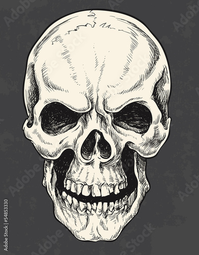 Hand Drawn Skull Vector © tairygreene