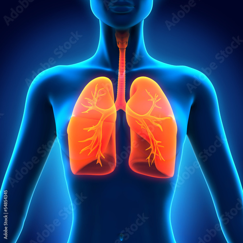 Female Anatomy of Human Respiratory System