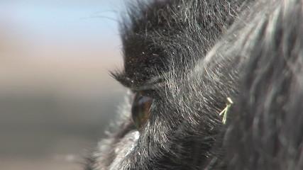 Eye of a dog