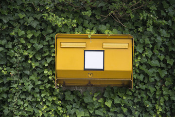 Public letterbox covered in ivy