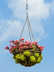 Flower hanging basket