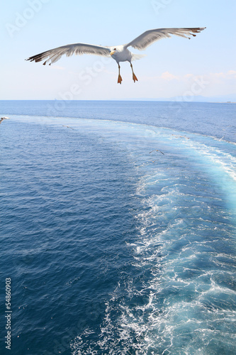 seagull escorting a ferry boat