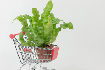 Einkauf im Gartencenter