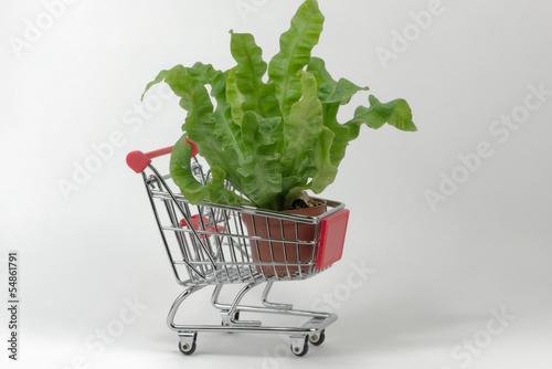 Pflanzen einkaufen