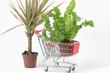 Pflanzen-Shopping