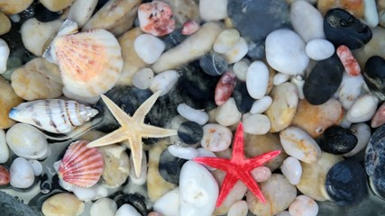 Seashell, starfish and pebbles in crystal clear wate - Silent -