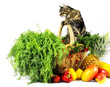 Cat in a basket with fruits and vegetables
