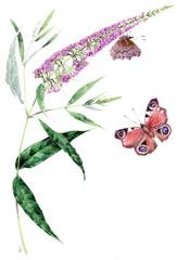 Buddleja davidi e farfalla