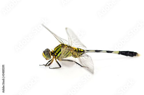 Green Tiger Skimmeri dragonfly