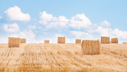 Bundles of straw on the field after harvest.