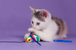Kitten with rainbow play mouse