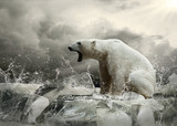 White Polar Bear Hunter on the Ice in water drops. - 54892902