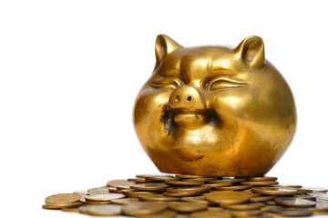 gold pig and money