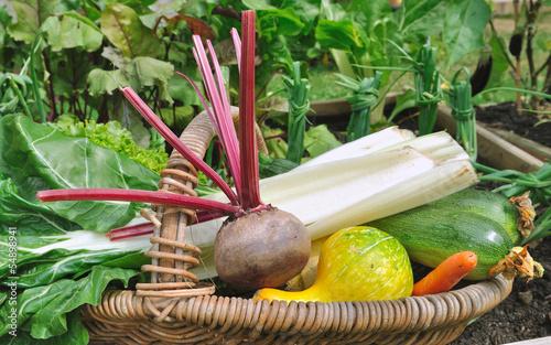 panier de légume dans potager