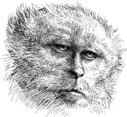 head of monkey