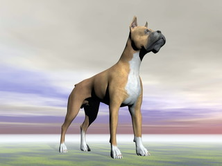 German boxer dog - 3D render