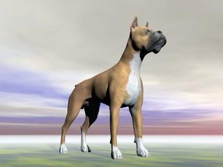 German boxer dog - 3D render