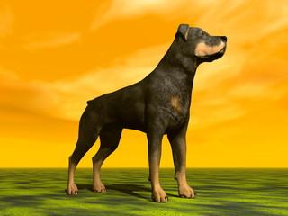 Rottweiller dog - 3D render