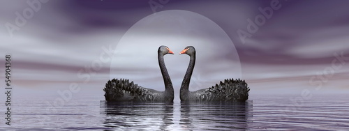 Black swans love - 3D render