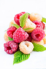 Mixed raspberries over light background