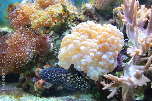 Leinwandbilder,aquarium,fisch,unterwasser,korallen