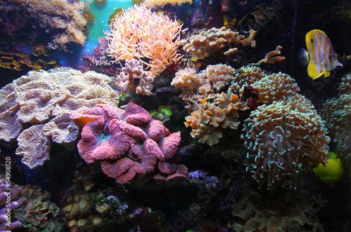 Leinwandbilder,fisch,unterwasser,aquarium,meer