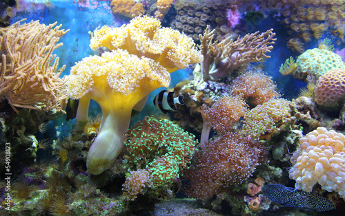 Leinwandbilder,meer,fisch,unterwasser,aquarium