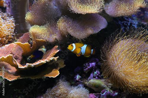 Fototapeten,meer,fisch,unterwasser,aquarium