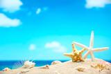 Fototapety Shells on the beach