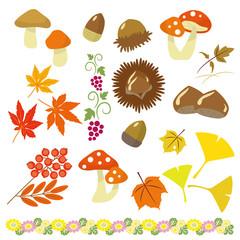 秋の植物 セット