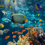 Coral and fish - 54918166