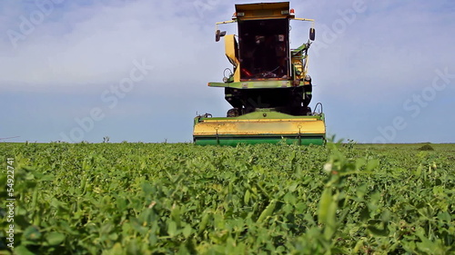 Pea harvester on a plantation