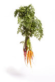 Hanging Rainbow Carrots