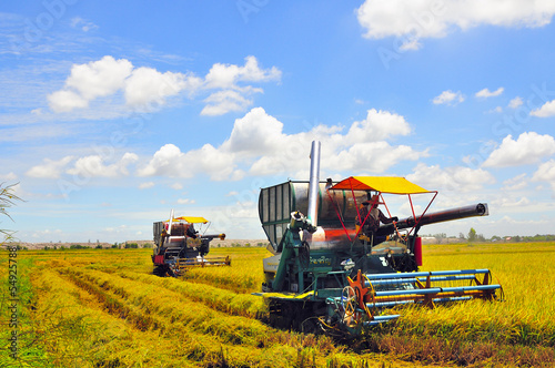 Combine machine harvesting ripe rice