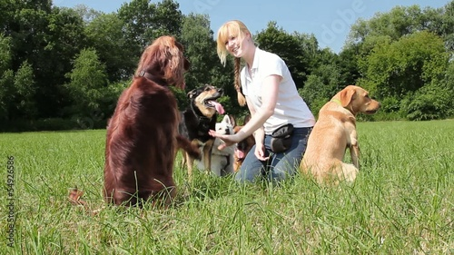Dog trainer trains irish setter