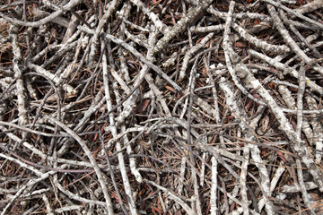 Close-up view of dead branches and sticks
