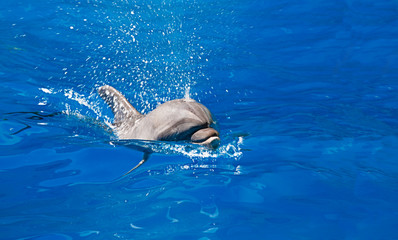 Dolphin in the water park