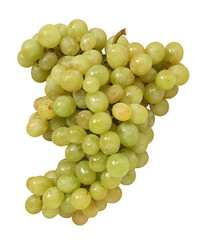 Uva bianca - White grape