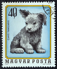 Dog puppy (Hungary 1974)