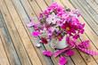 canvas print picture - Rosa Gartenblumen