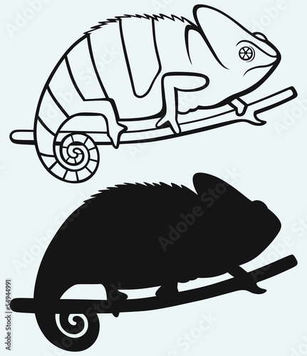 Silhouette chameleon isolated on blue background