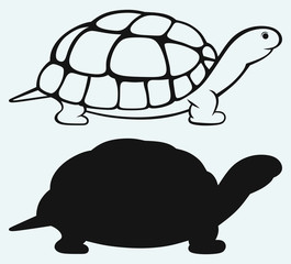 Sea turtle isolated on blue background