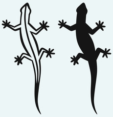 Silhouette lizard isolated on blue background